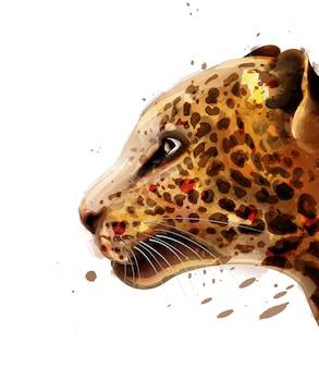 Acquerello leopardo
