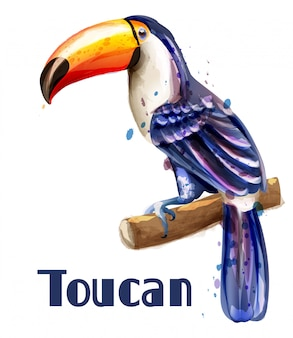 Acquerello pappagallo tucano