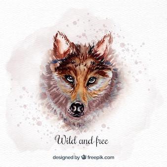 Acquerello selvaggio e lupo libero