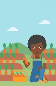 Agricoltore che raccoglie le carote