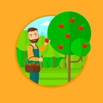 Agricoltore che raccoglie mele.