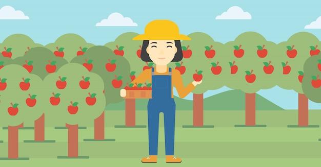 Agricoltore che raccoglie mele