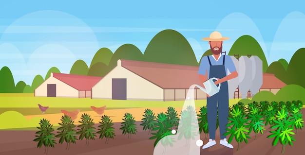 Agricoltore irrigazione di cannabis all'aperto piantagione di canapa industriale crescente pianta di marijuana attività commerciale concetto di consumo di droga campo agricolo campagna orizzontale