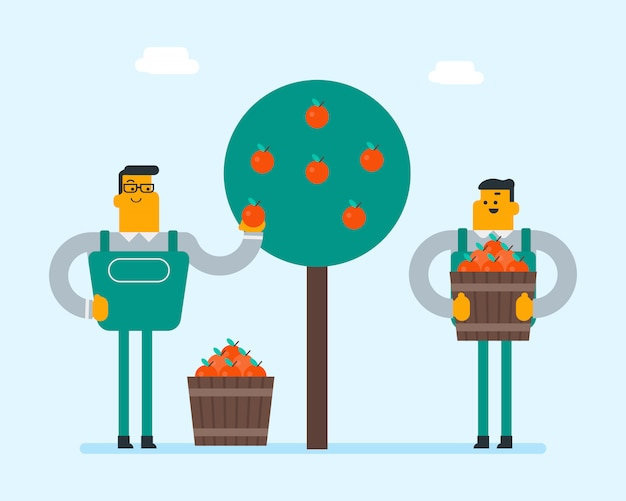 Agricoltori caucasici che raccolgono le mele nel giardino.