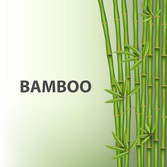 Albero di bambù cinese. pianta asiatica tropicale