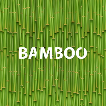 Albero di erba di bambù cinese.