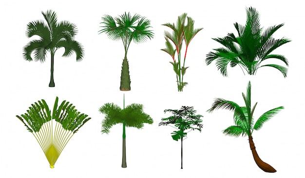 Albero di palma abbagliante della palma dell'albero di vettore. isolato