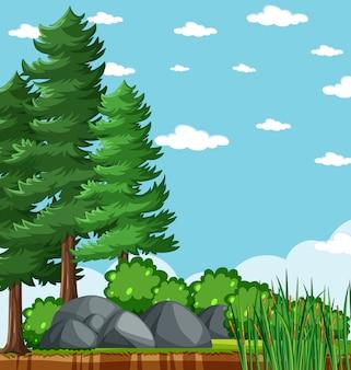 Albero di pini nel parco naturale con la scena luminosa in bianco del cielo blu