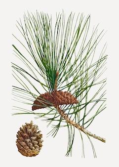 Albero di pino nero