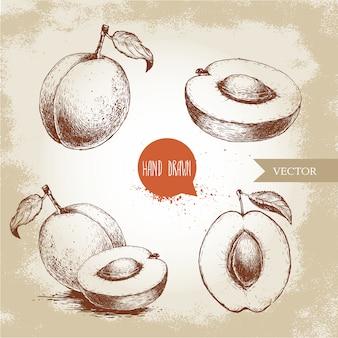 Albicocche mature disegnate a mano messe isolate. illustrazione di cibo eco stile retrò schizzo vettoriale.