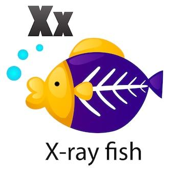 Alfabeto lettera pesce a raggi x