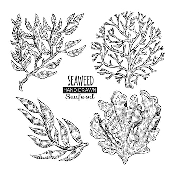 Alghe disegnate a mano.