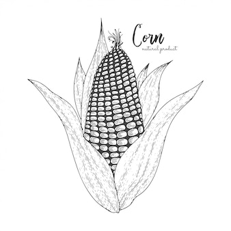 Alimento naturale per il mercato degli agricoltori. illustrazione disegnata a mano di mais