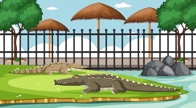 Alligatore nella scena dello zoo