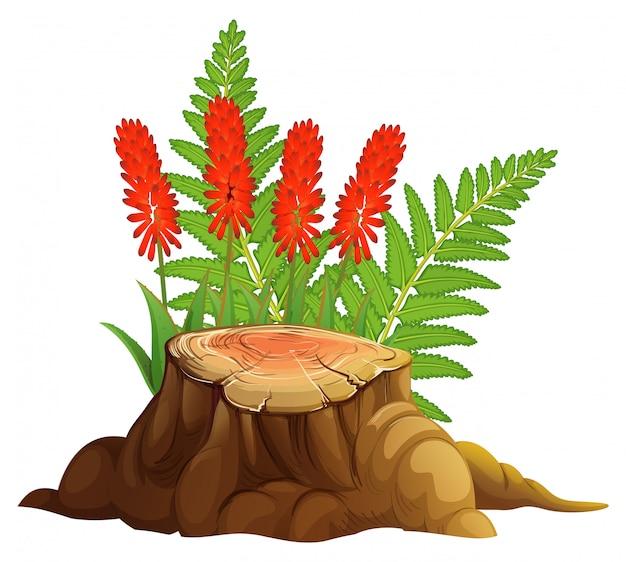 Aloe vera con fiori rossi su sfondo bianco