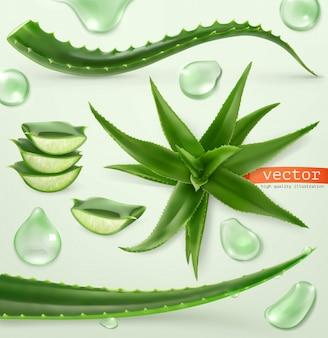 Aloe vera e goccia. medicinallant. set di icone 3d