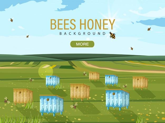 Alveare dell'ape del miele