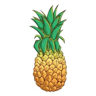 Ananas con colore e contorno su sfondo bianco