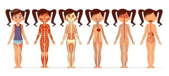 Anatomia del corpo della ragazza. Struttura medica del corpo umano femminile del fumetto di muscolare