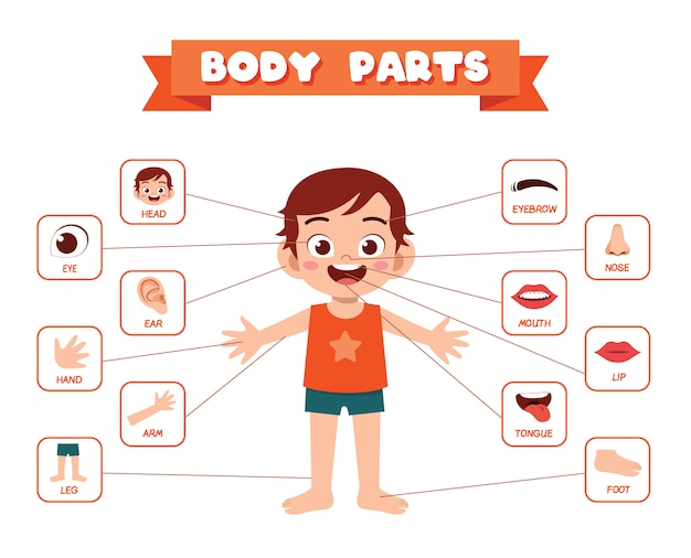 Anatomia felice della parte del corpo del ragazzo del bambino sveglio