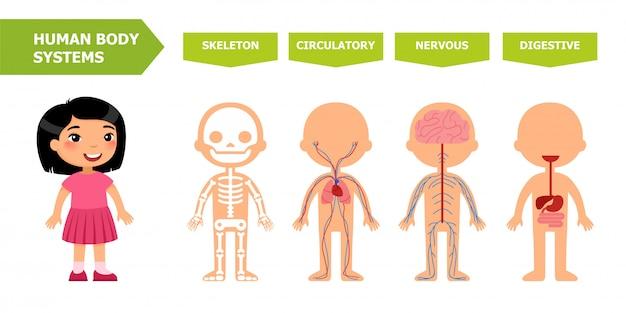 Anatomia per bambini.