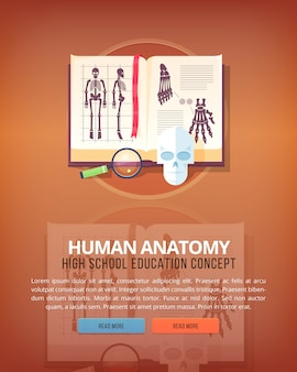 Anatomia umana. concetti di layout verticale di educazione e scienza. stile moderno.