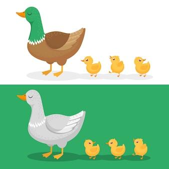 Anatroccoli e anatra madre, famiglia di anatre, anatroccolo che segue la mamma e camminando mallard baby pulcini gruppo cartoon