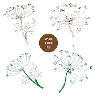 Aneto. insieme disegnato a mano di vettore delle piante cosmetiche isolato su fondo bianco