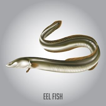 Anguilla illustrazione vettoriale di pesce