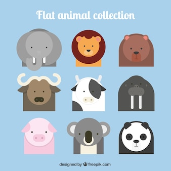Animal collection piatto