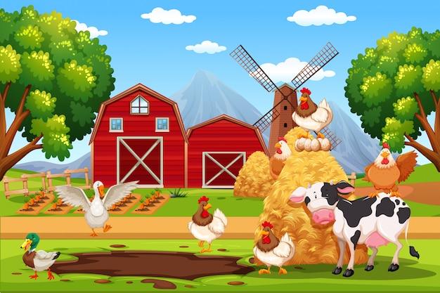 Animale alla fattoria
