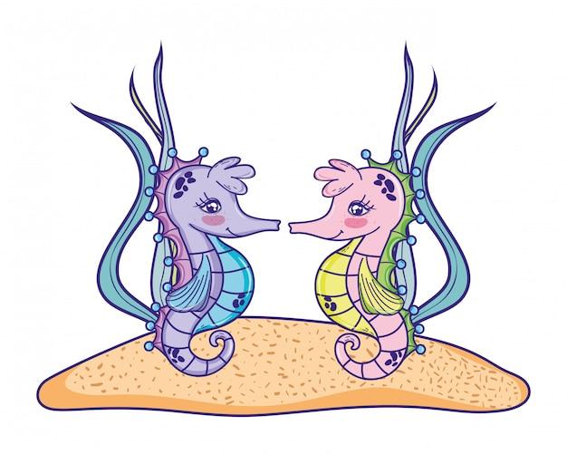 Animale coppia di cavallucci marini con piante di alghe