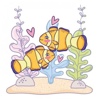 Animale delle coppie del pesce pagliaccio con le piante dell'alga marina