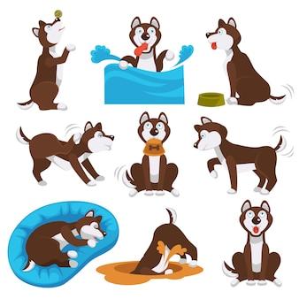 Animale domestico del fumetto del cane del husky che gioca o che si prepara