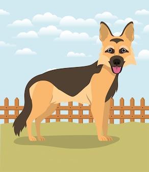 Animale domestico sveglio del cane da pastore tedesco nel campo