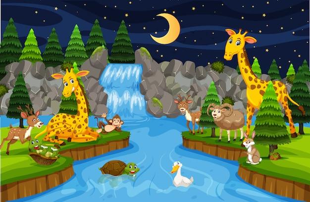 Animali alla scena notturna della cascata