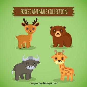 Animali belli con cute