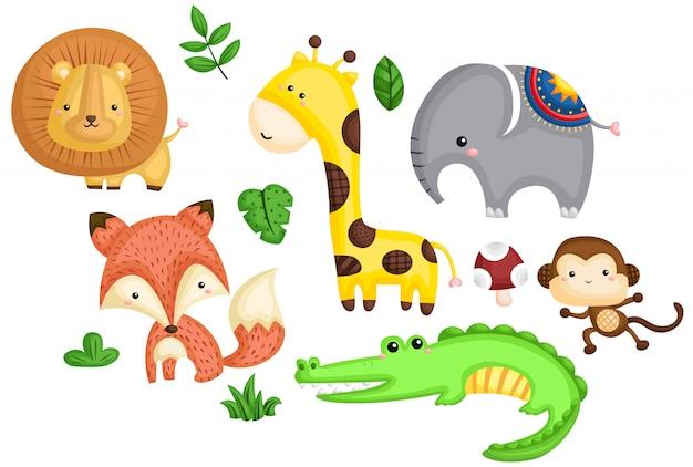 Animali colorati