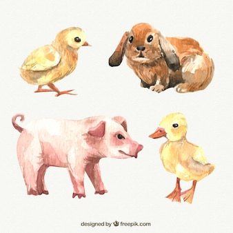 Animali da fattoria acquerello