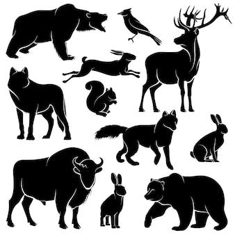 Animali della foresta di vettore per la progettazione di legno. collezione di zoologia