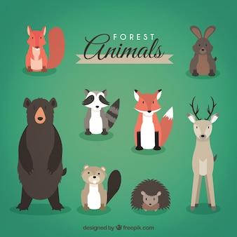 Animali della foresta testa sul pacchetto