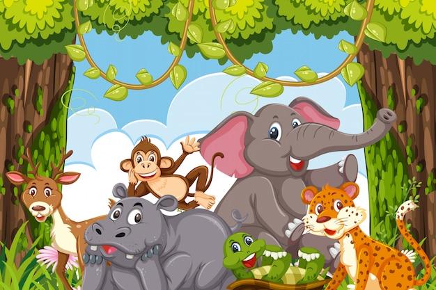 Animali della giungla in un chiarore della foresta