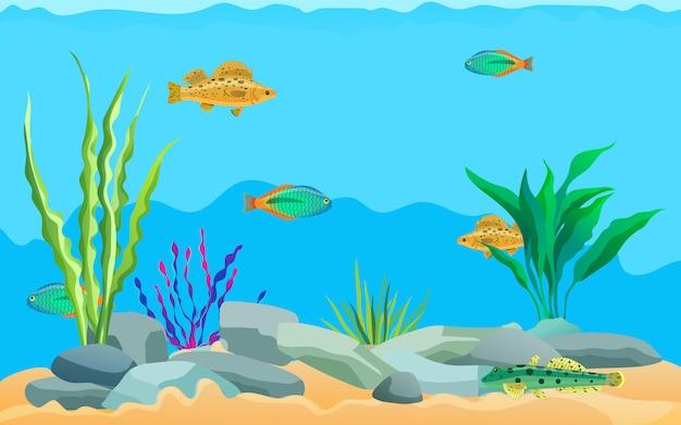 Animali marini multicolori, piante acquatiche e pietre