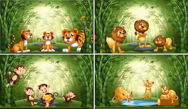 Animali nella foresta di bambù
