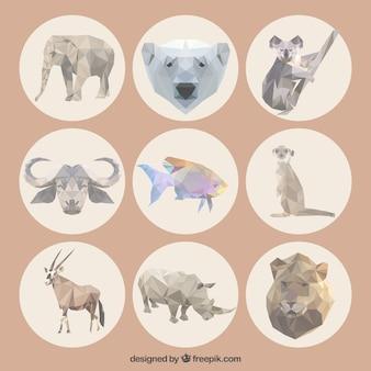 Animali poligonali