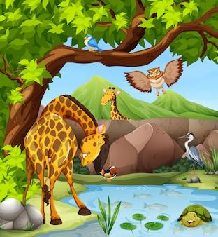 Animali selvaggi vicino allo stagno