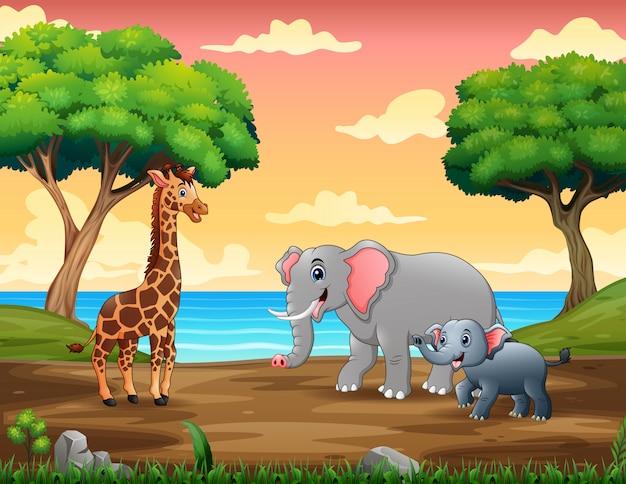 Animali selvatici che camminano sulla riva del fiume