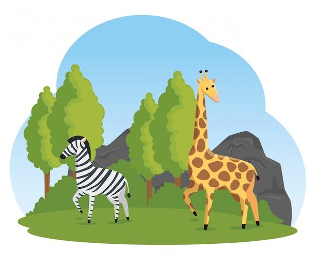 Animali selvatici della giraffa e della zebra nel safari della natura