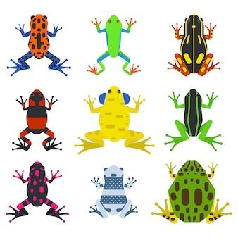 Animali tropicali del fumetto della rana e icone verdi della natura