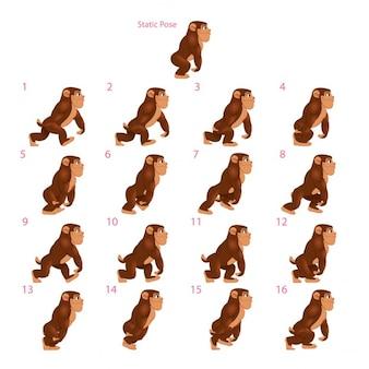 Animazione di gorilla che cammina sedici deambulatori 1 pongono vector cartoon isolato characterframes statici